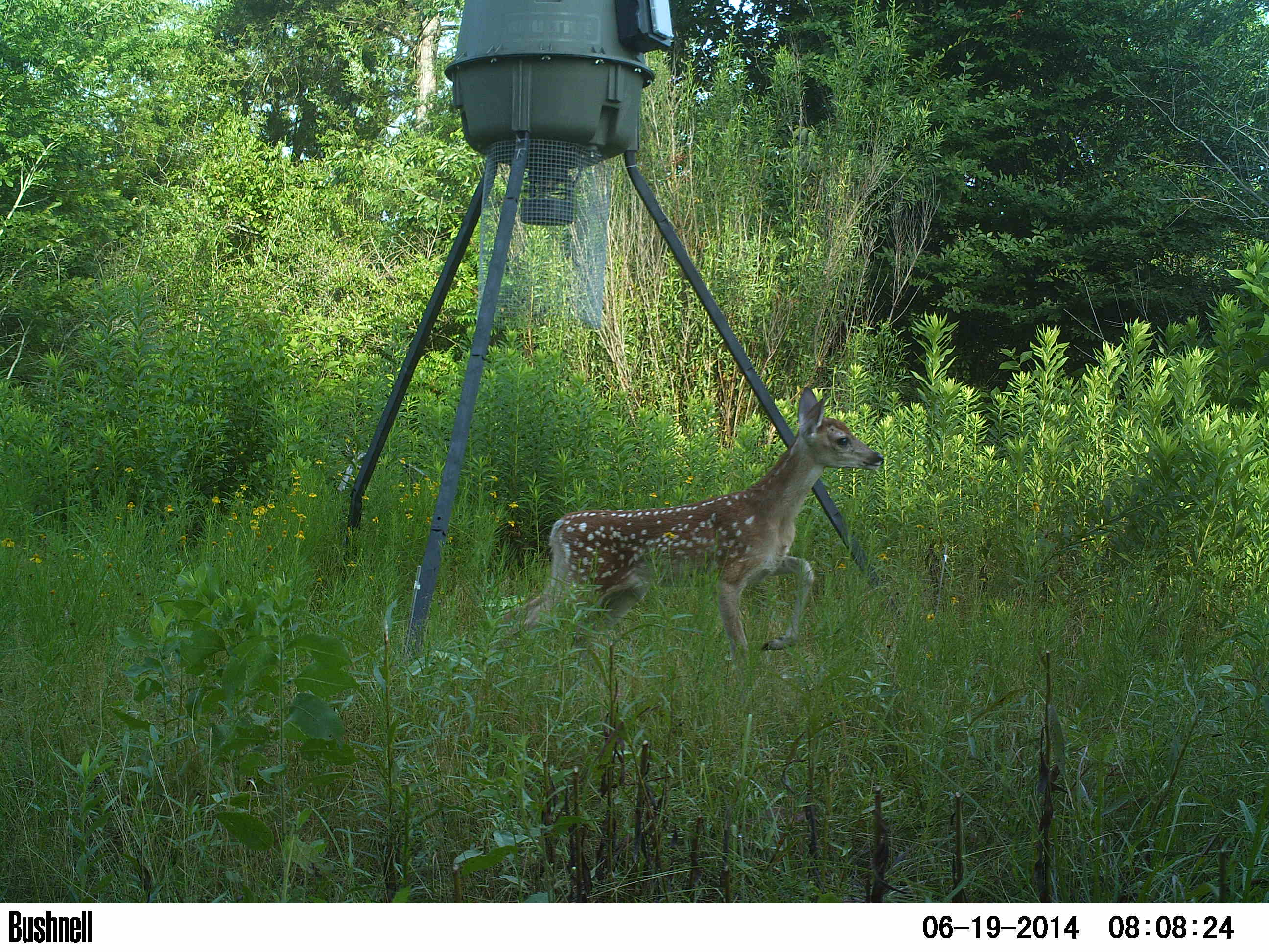 feeder rush buck arms deer hunts filming for boss sep feeders camera photo tag hunting pm